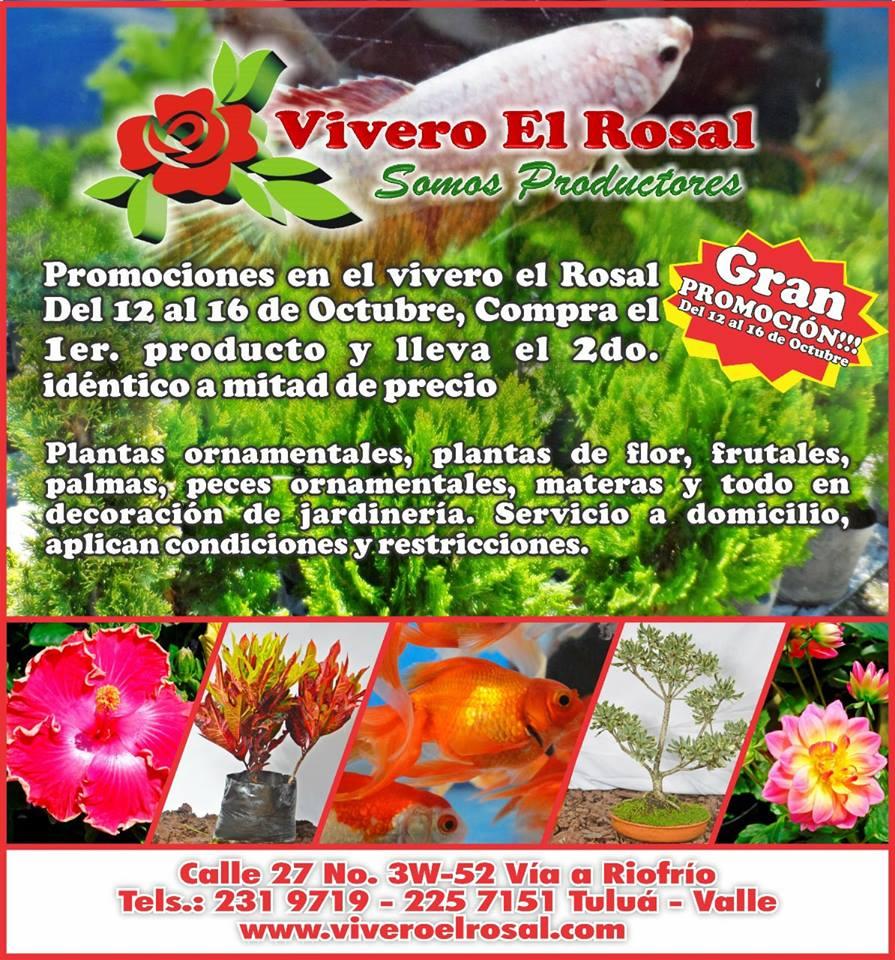 Vivero el rosal tulu de promoci n este fin de semana for Viveros el rosal