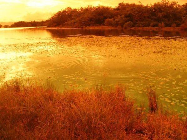 Guacarí cumple 449 años. Tierra del Samánes potencial cultural, turístico y gastronómico. 28