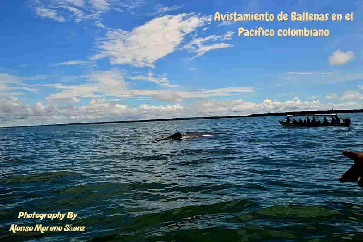 Avistamiento de ballenas en el Pacífico con Alonso Moreno Sáenz enviado especial 29