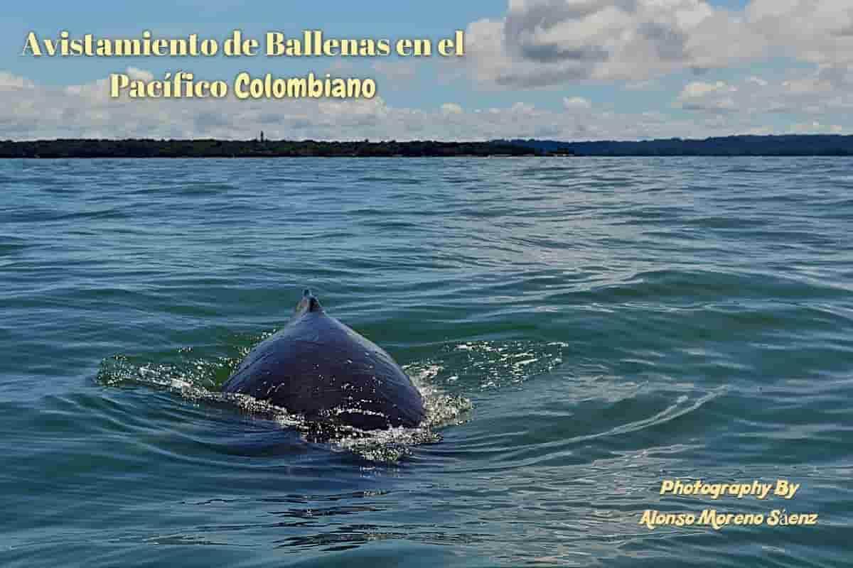 Avistamiento de ballenas en el Pacífico con Alonso Moreno Sáenz enviado especial 30