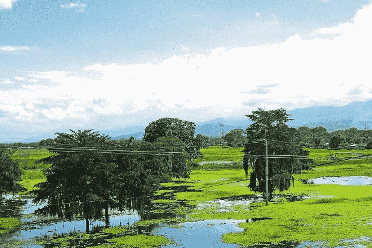 Guacarí, municipio de maestros y músicos en el Valle del Cauca 5
