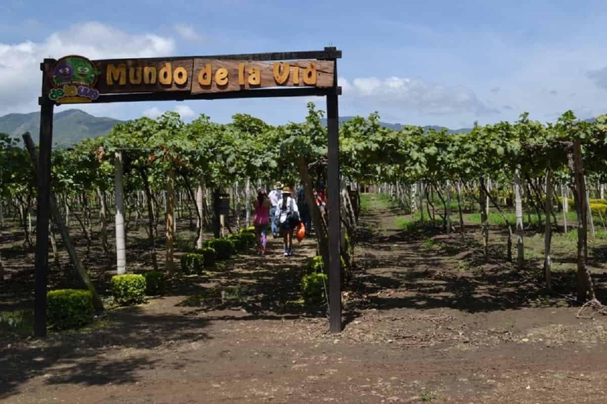 La Unión, municipio vallecaucano con los mejores vinos que embriaga con su paisaje 2