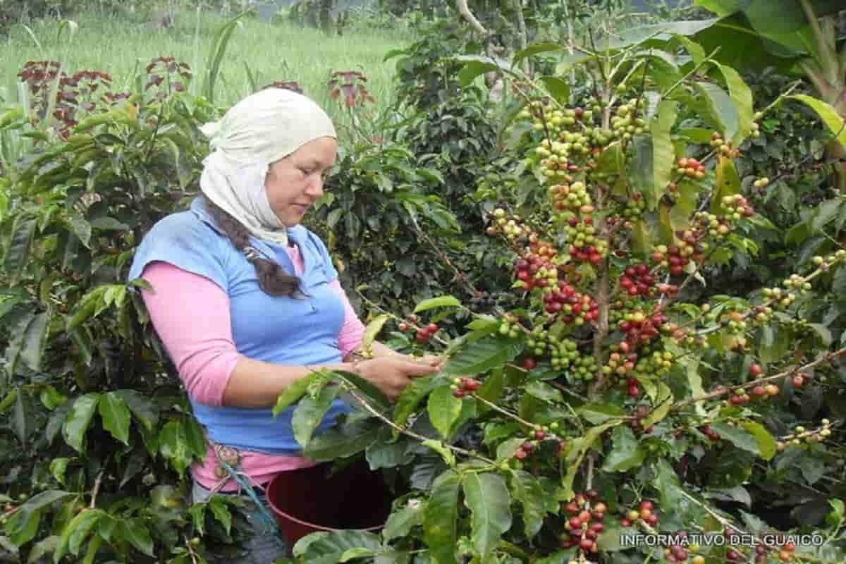 "Caicedonia municipio ""Centinela"" del Valle del Cauca que sabe a Café 2"